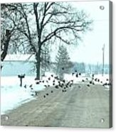Disturbing The Flock Acrylic Print by Julie Dant