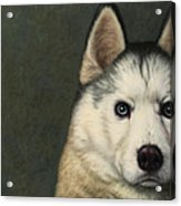 Dog-nature 9 Acrylic Print by James W Johnson