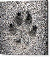 Dog Paw Print In Sand Acrylic Print by Elena Elisseeva