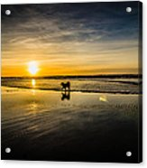 Doggy Sunset Acrylic Print by Puget  Exposure