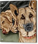 Dogs Acrylic Print by Karen Sheltrown