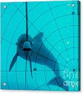 Dolphin Experiment Acrylic Print by James L. Amos