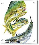 Dolphin Kingfish Acrylic Print by Carey Chen
