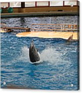 Dolphin Show - National Aquarium In Baltimore Md - 1212102 Acrylic Print by DC Photographer