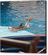 Dolphin Show - National Aquarium In Baltimore Md - 1212104 Acrylic Print by DC Photographer