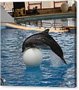 Dolphin Show - National Aquarium In Baltimore Md - 1212160 Acrylic Print by DC Photographer