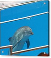 Dolphin Show - National Aquarium In Baltimore Md - 1212193 Acrylic Print by DC Photographer