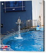 Dolphin Show - National Aquarium In Baltimore Md - 1212200 Acrylic Print by DC Photographer