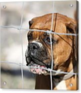 Don't Fence Me In Acrylic Print by Terry Fleckney