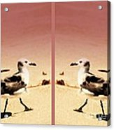 Double Gulls Collage Acrylic Print by Susanne Van Hulst