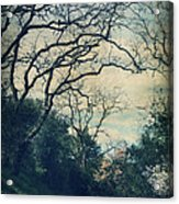 Down That Path Acrylic Print by Laurie Search