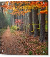 Down The Trail Acrylic Print by Bill Wakeley