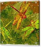 Dragonflies Abound Acrylic Print by Jack Zulli