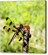 Dragonfly Eating Breakfast Acrylic Print by Andee Design