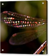 Dragonfly Jewels Acrylic Print by Rona Black