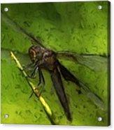Dragonfly Macro Acrylic Print by Jack Zulli
