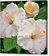 Dreamy Blooms - White Hibiscus Acrylic Print by Ben and Raisa Gertsberg