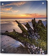 Driftwood On The Beach Acrylic Print by Debra and Dave Vanderlaan
