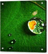 Droplet Of Love Acrylic Print by Suradej Chuephanich