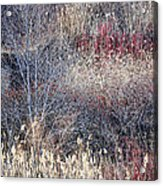 Dry Grasses And Bare Trees Acrylic Print by Elena Elisseeva