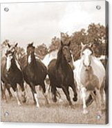 Duchess Sanctuary Big Herd Acrylic Print by Duchess Sanctuary
