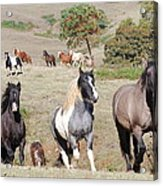 Duchess Sanctuary On The Move Acrylic Print by Duchess Sanctuary