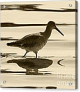 Early Morning In The Moss Landing Harbor Picture Of A Willet Acrylic Print by Artist and Photographer Laura Wrede