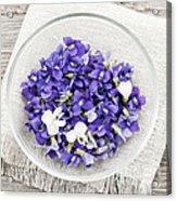 Edible Violets  Acrylic Print by Elena Elisseeva