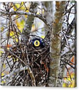 Eggstraordinary Acrylic Print by Al Powell Photography USA