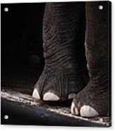 Elephant Toes Acrylic Print by Bob Orsillo