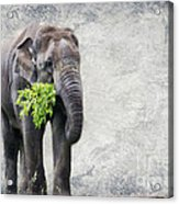 Elephant With A Snack Acrylic Print by Tom Gari Gallery-Three-Photography