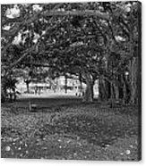 Embraced By Trees Acrylic Print by Douglas Barnard