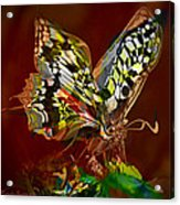 Enchanted Butterfly. First.  Acrylic Print by Tautvydas Davainis
