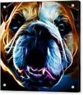 English Bulldog - Electric Acrylic Print by Wingsdomain Art and Photography