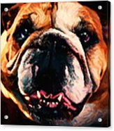 English Bulldog - Painterly Acrylic Print by Wingsdomain Art and Photography