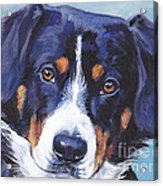 Entlebucher Mountain Dog Acrylic Print by Lee Ann Shepard
