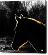 Equine Glow Acrylic Print by Steven Milner