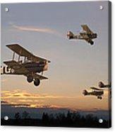 Evening Flight Acrylic Print by Pat Speirs