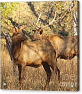 Evening Sets On The Elk Acrylic Print by Robert Frederick