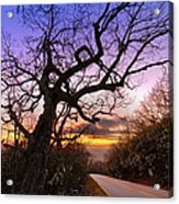 Evening Tree Acrylic Print by Debra and Dave Vanderlaan
