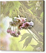 Everyday Blessings Acrylic Print by Bonnie Bruno