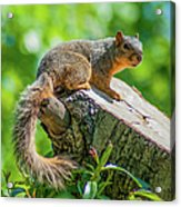 Exploring Acrylic Print by Optical Playground By MP Ray