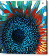Eye Of The Sunflower Acrylic Print by Music of the Heart