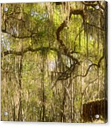 Fabulous Spanish Moss Acrylic Print by Christine Till