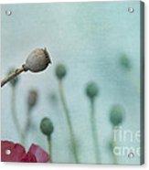 faded summer III Acrylic Print by Priska Wettstein