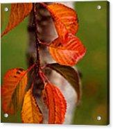 Fall Beauty Acrylic Print by Sharon Elliott