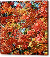 Fall Foliage Colors 22 Acrylic Print by Metro DC Photography