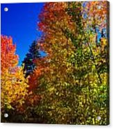 Fall Foliage Palette Acrylic Print by Scott McGuire