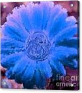 Fall For Me Purple Blue Acrylic Print by Holley Jacobs