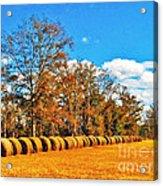 Fall Hayfield Acrylic Print by M Glisson